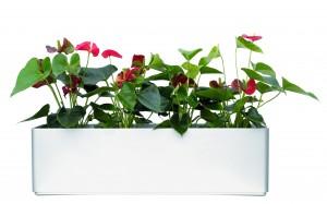 Basic 80 cm x 20 cm Sideboradgefäß inklusive Hydro Profi Line System für Hydrokulturen