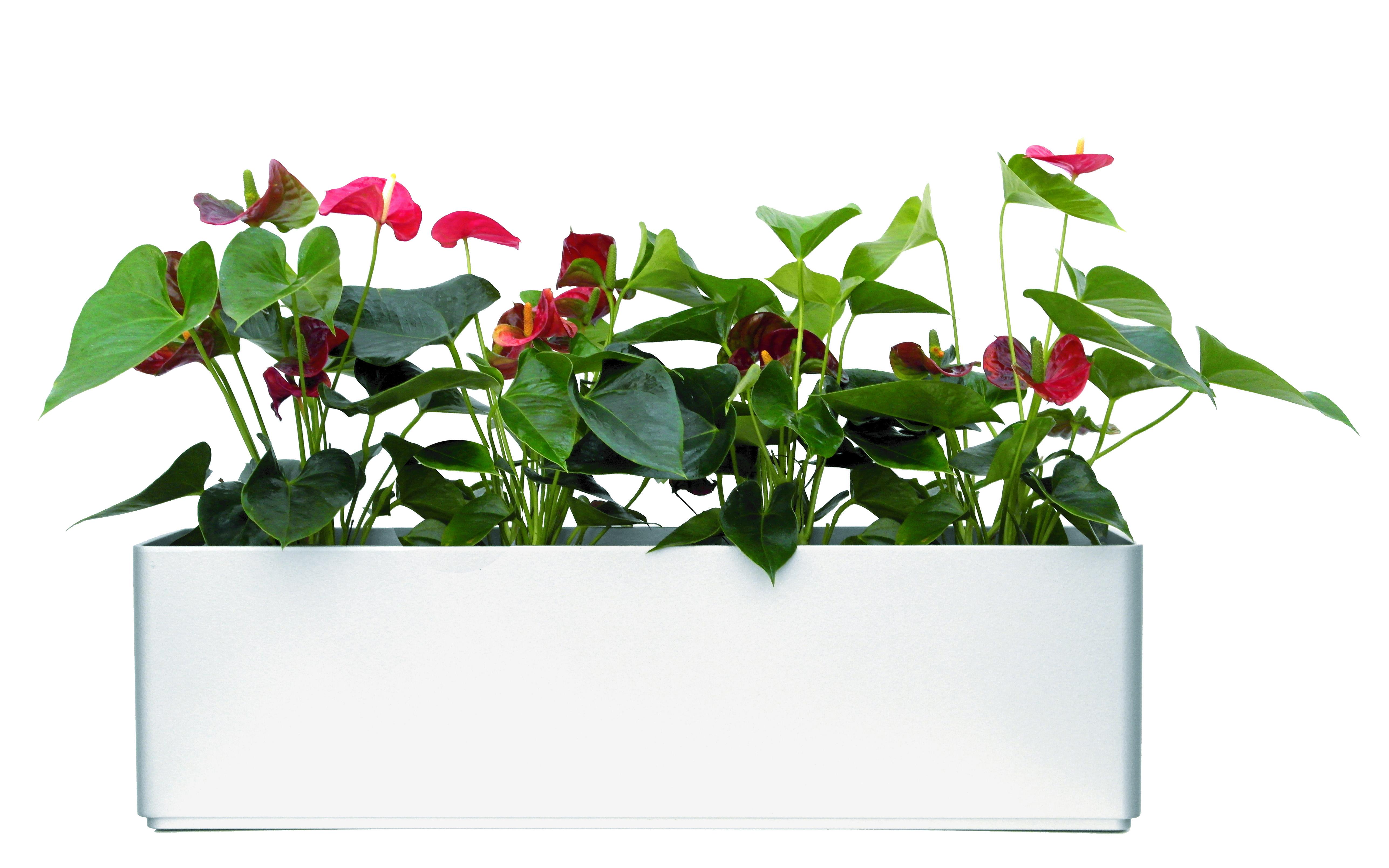 Mit 80 cm stunning full size of duschwanne x cm for Hydrokultur design