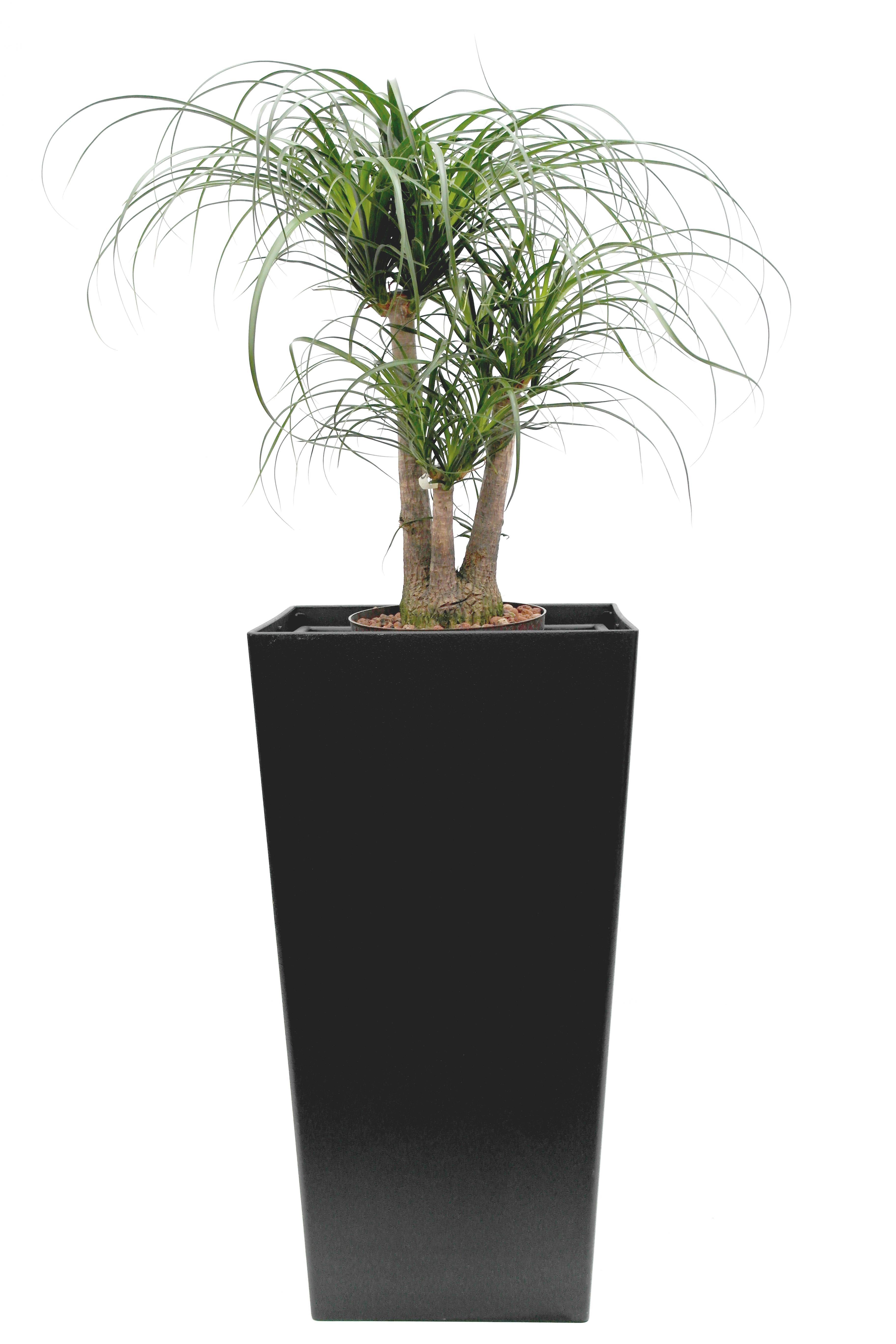 promo 40 gef e mit topf in topf f r hydrokulturpflanzen. Black Bedroom Furniture Sets. Home Design Ideas
