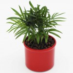 Plants 4 Kids / Plants for Kids mit Hydro Profi Line
