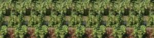 Grüne Wand HPL Erde Freiland 1