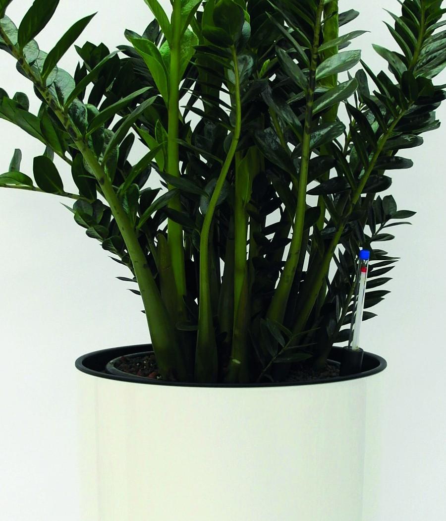Zimmerpflanzen Bilder zimmerpflanzen hydro profi line pflanzsysteme