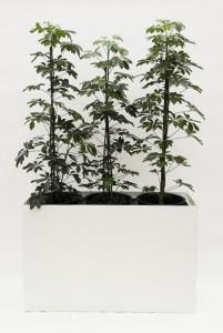Prestige RE 120 cm x 40 cm inklusive Topf in Topf und Hydro Profi Line Pflanzsystem für Hydrokulturen