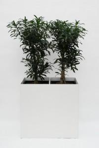 Prestige RE 80 cm x 40 cm inklusive Topf in Topf und Hydro Profi Line Pflanzsystem für Hydrokulturen