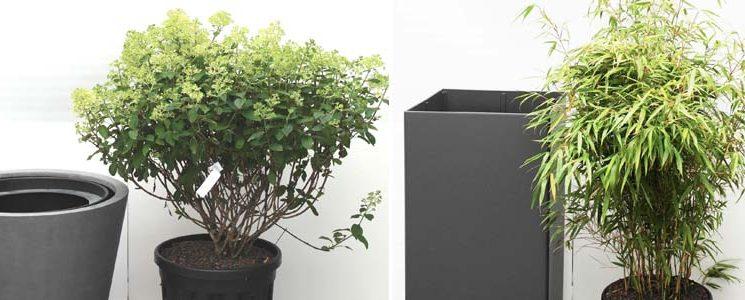 Pflanzsystem für Freilandpflanzen
