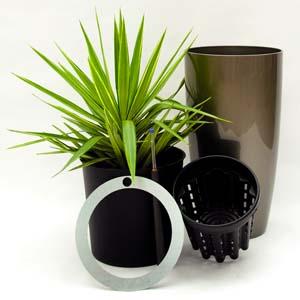 Systemabbildung Zimmerpflanzen