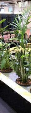 Einhängen der Pflanzen im HPL® Kulturtopf in die HPL® Systemscheiben