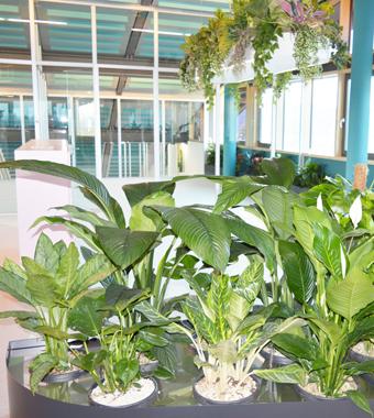 Hydro Profi Line für Zimmerpflanzen in Erde