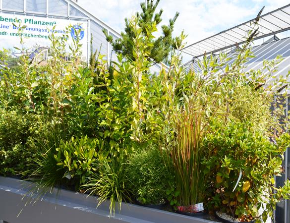 Erdpflanzensystem 1